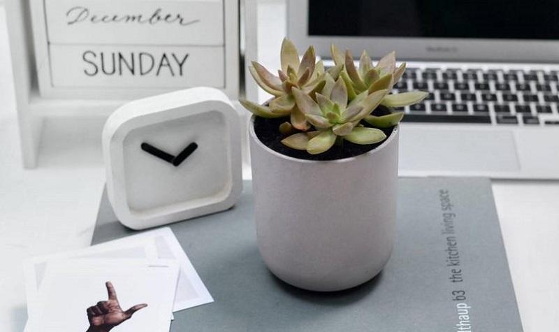 Cây sen đá là lựa chọn tuyệt vời để trang trí bàn làm việc