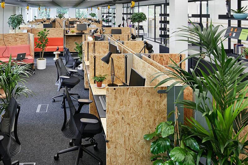 Cây trang trí văn phòng giúp không gian làm việc trở nên xanh mát và đẹp mắt hơn