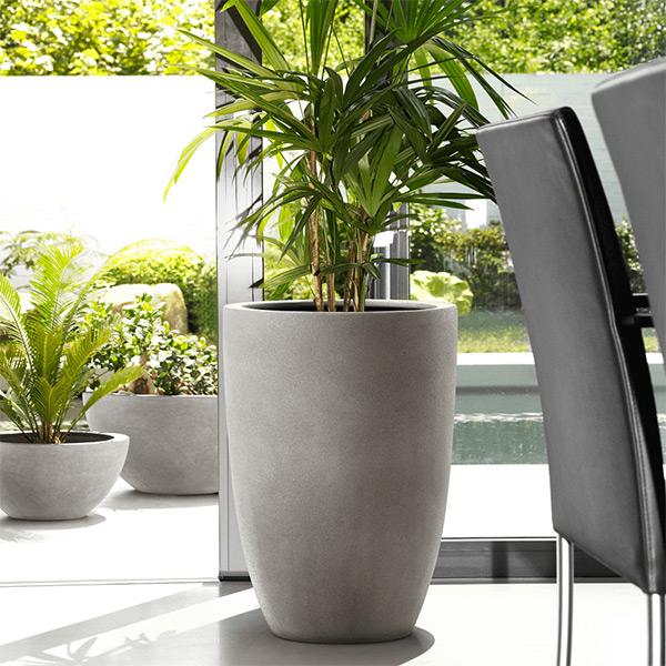 Chọn chậu cây cảnh cần đảm bảo sự phù hợp giữa kích thước chậu và cây