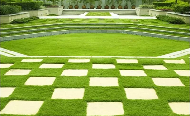 Để cỏ nhung Nhật phát sinh trưởng tốt nhất cần dành thời gian chăm sóc cho cây