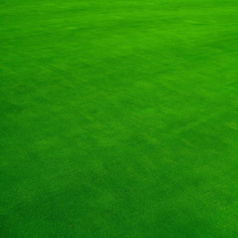 Giống cỏ phát triển