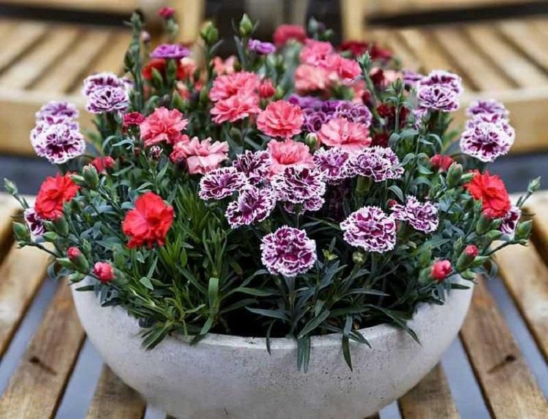 Hạt giống hoa là yếu tố quan trọng nhất quyết định đến độ nảy mầm, phát triển của cây