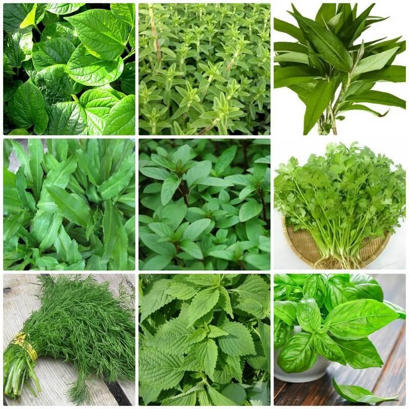 Hạt giống rau ăn lá rất đa dạng, phong phú