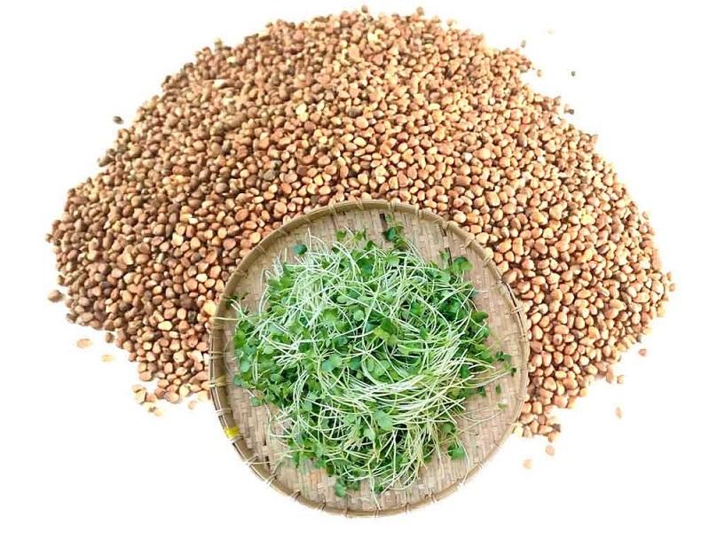 Hạt giống rau mầm giúp nhanh cho thu hoạch