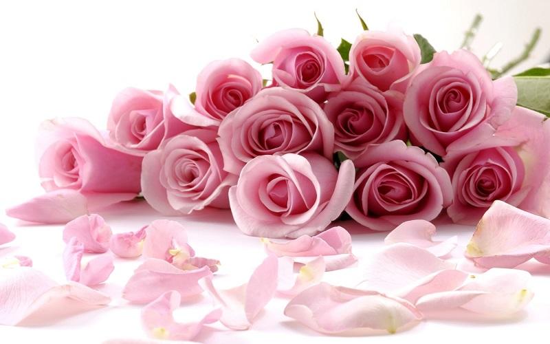 Hoa hồng tình yêu thể hiện tình cảm ngọt ngào, say đắm với người mình yêu thương