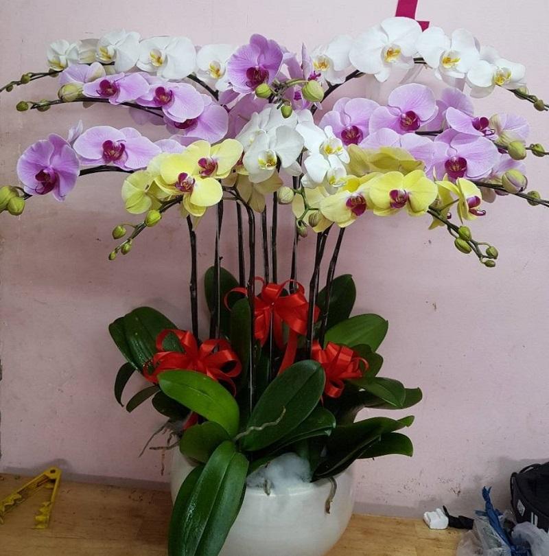 Hoa lan hồ điệp là biểu tượng của tình yêu mãnh liệt, nồng nàn