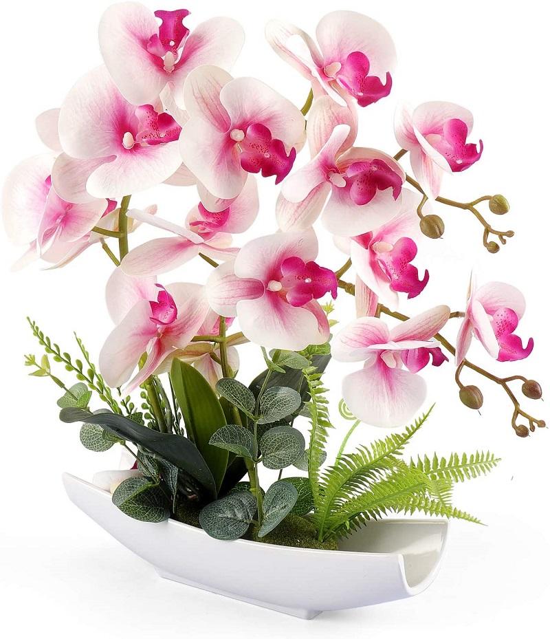 Hoa lan hồ điệp mang vẻ đẹp kiêu sa, sang trọng và quý phái