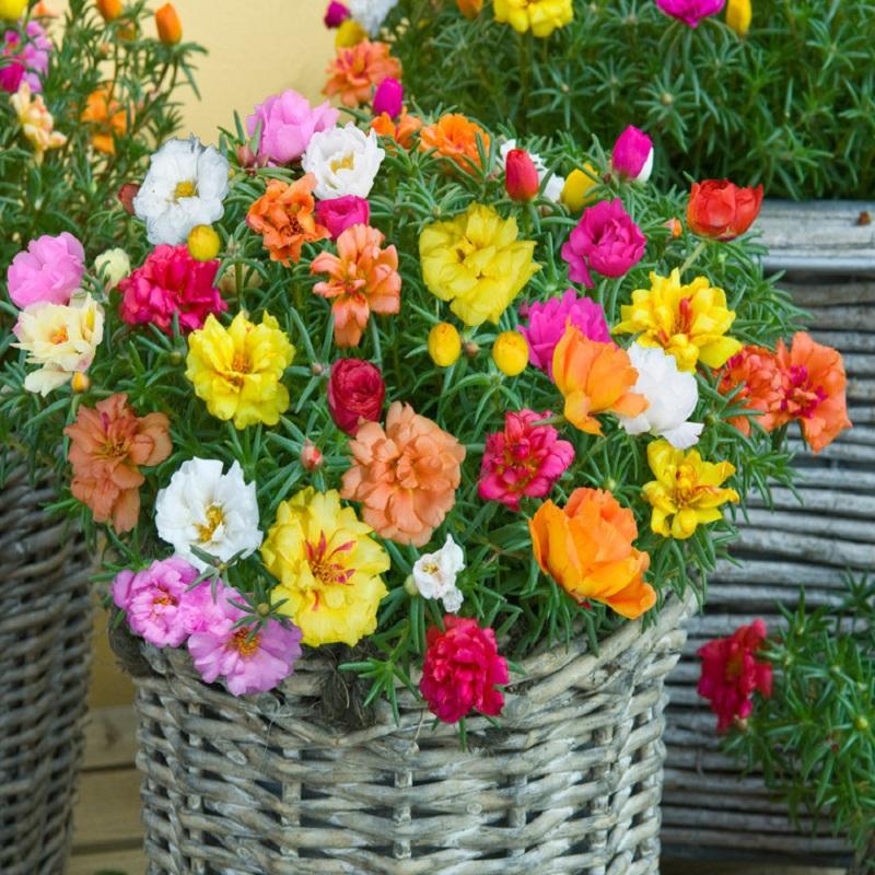 Lựa chọn hạt giống hoa đẹp cần chú ý đến chất lượng hạt giống