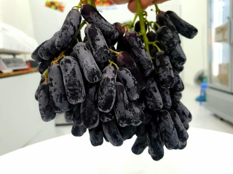 Trái cây nhập khẩu sở hữu vẻ ngoài độc lạ và cực kỳ bắt mắt