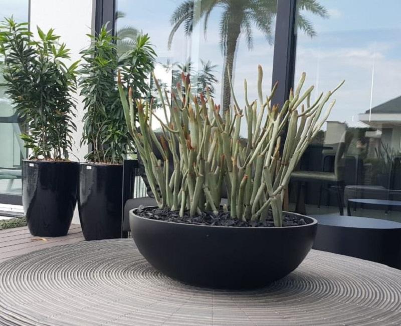 Vị trí đặt chậu cây cảnh cần đảm bảo về ánh sáng, nhiệt độ và thông gió