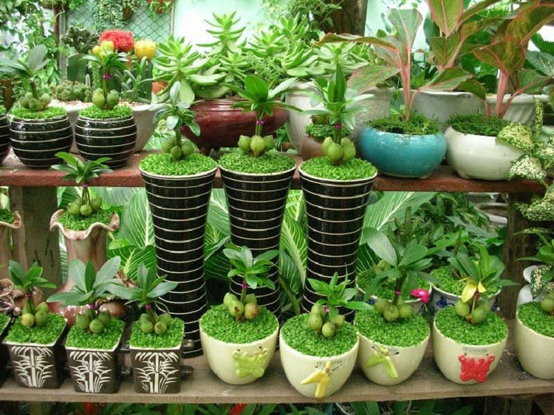 Vườn Mặt Trời cung cấp các loại cây cảnh văn phòng đẹp nhất tại Hà Nội