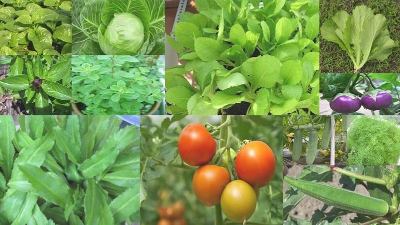 Vườn Mặt Trời là địa chỉ bán hạt giống rau ở Hà Nội uy tín nhất