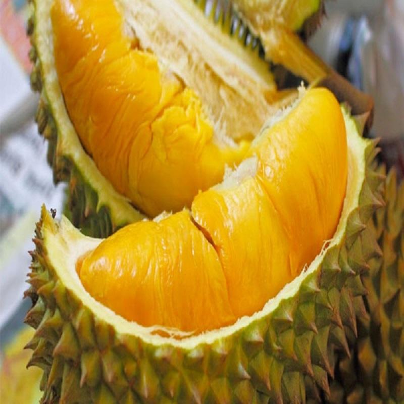 Ăn sầu riêng đúng cách giúp cải thiện hệ thống miễn dịch cho cơ thể