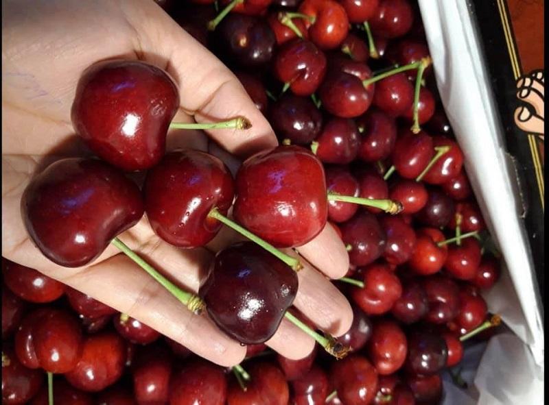 Bổ sung cherry mỗi tuần để cải thiện chức năng của não bộ
