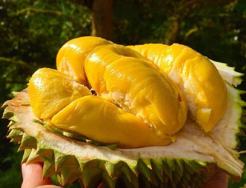 Sầu riêng musang king được mệnh danh là vua trái cây