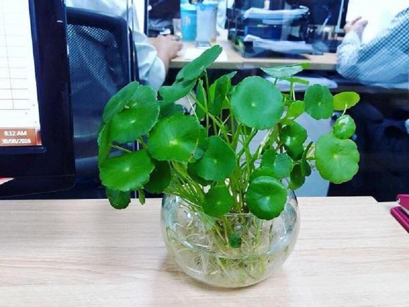 Cây thân thảo sống trên mặt nước