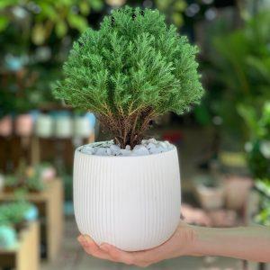 Đặt mua cây tại Vườn Mặt Trời