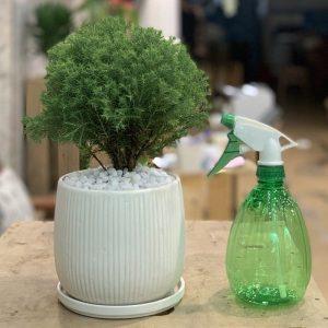Dinh dưỡng cây không cần chăm bón thường xuyên