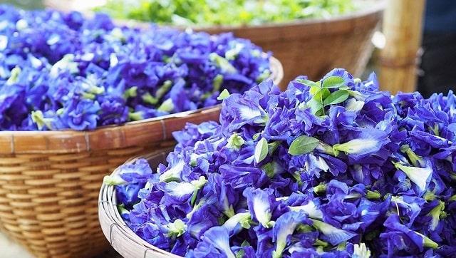 Hoa đậu biếc được ghi nhận có nhiều tác dụng tốt cho sức khỏe