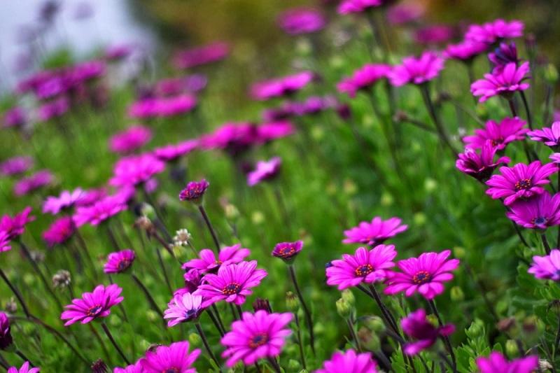 Trang trí vườn hoa