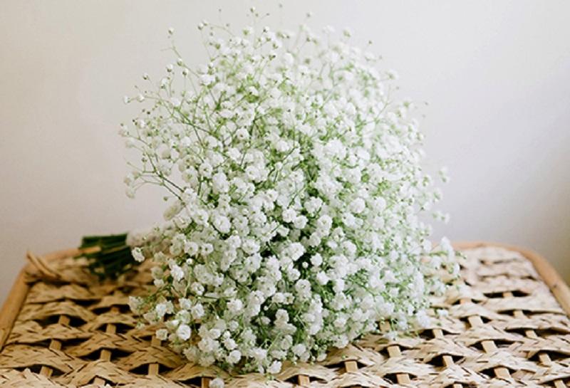 Hoa tượng trưng cho sự khiêm tốn, nhường nhịn