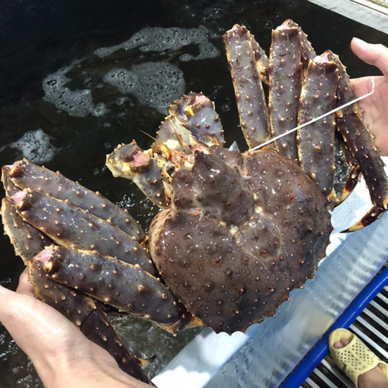 Loài hải sản xuất hiện ở vùng Alaska