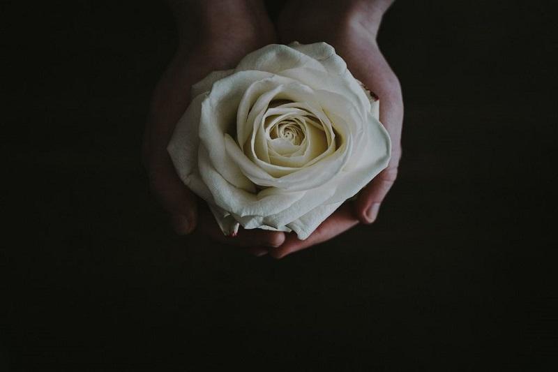Loài hoa gắn liền với vẻ đẹp của nữ thần tình yêu Venus