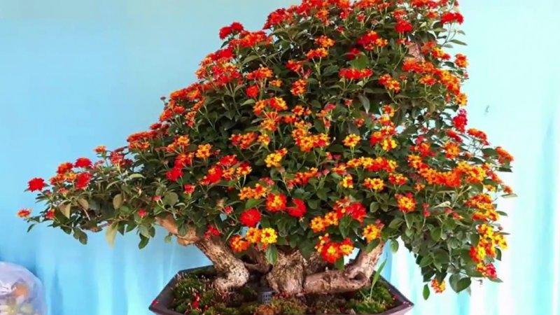 Loài hoa mang ý nghĩa gợi nhớ về quê hương, ký ức tuổi thơ
