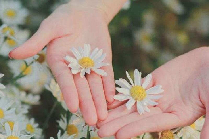 Mua cúc họa mi bền đẹp tại shop cung cấp các loại hoa tươi uy tín