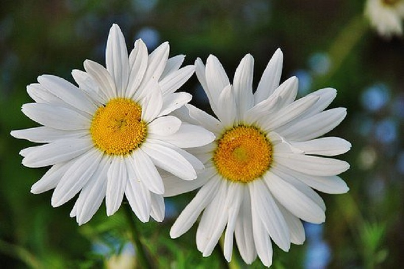 Mua hoa tươi bền đẹp tại shop đáng tin cậy