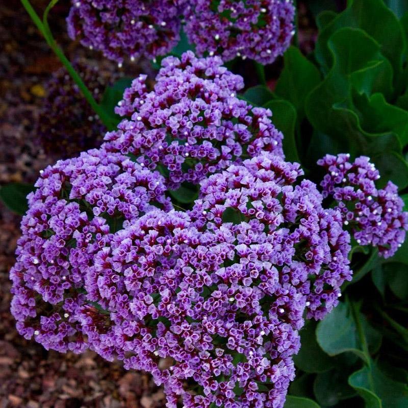 Trồng và chăm sóc hoa đúng cách để cây sinh trưởng tốt