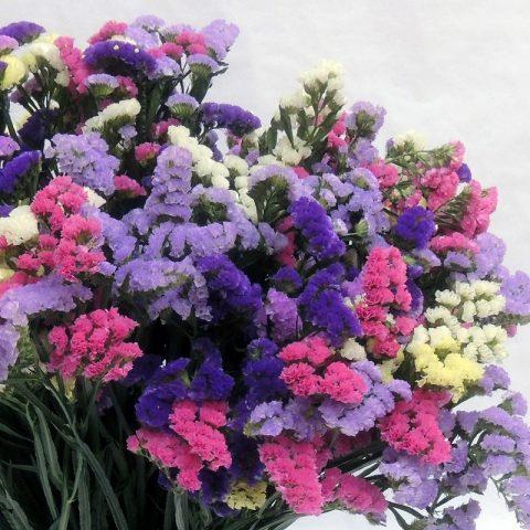 Vẻ đẹp của hoa salem khiến bao người phải ngắm nhìn