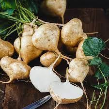 mua hạt giống củ đậu