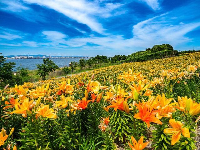 Các loại hạt giống hoa ly hiện nay rất đa dạng