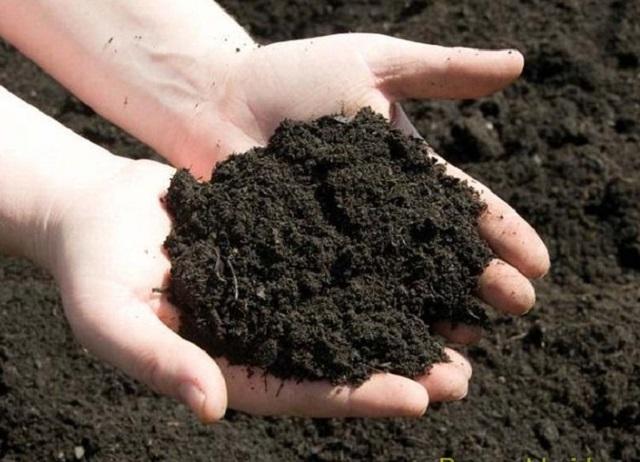 Chuẩn bị đất trồng Củ Đậu