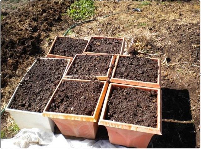 Đất trồng gieo hạt giống cà rốt cần đảm bảo tơi xốp và màu mỡ