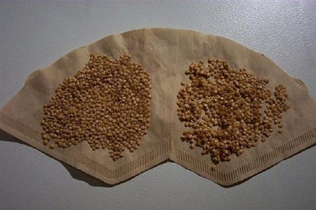 Giá hạt giống Cà Tím phù hợp tài chính