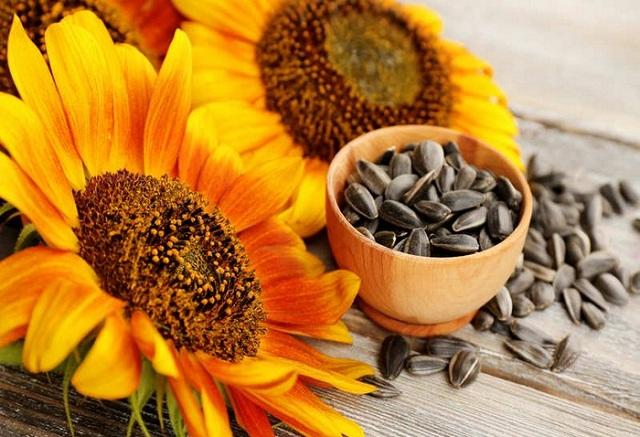 Giá hạt giống Hoa Hướng Dương không quá cao