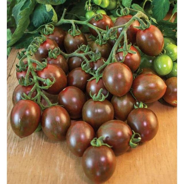Giống cà chua bi socola ngọt ngào