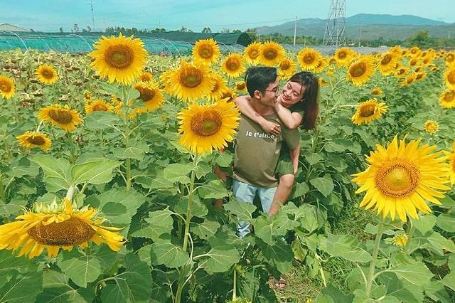 Hoa Hướng Dương tượng trưng cho cái đẹp, sự son sắc trong tình yêu