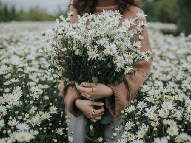 Hoa có khả năng dưỡng ẩm tốt