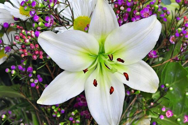 Hoa ly là món quà ý nghĩa để dành tặng người thân yêu
