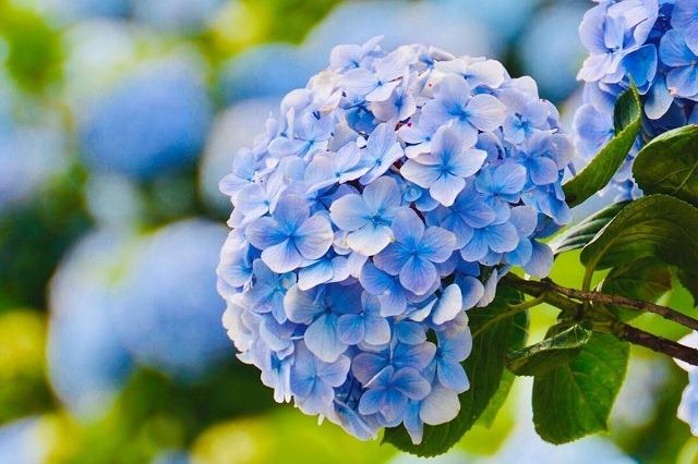 Shop Vườn Mặt Trời – Nơi bạn có thể tin tưởng đặt mua hạt giống hoa cẩm tú