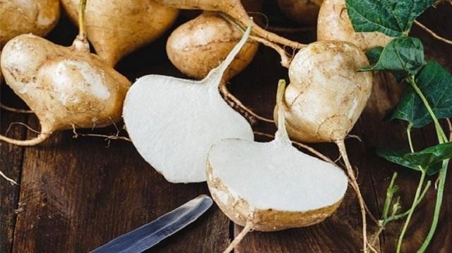 Trồng và chăm sóc hạt giống Củ Đậu như thế nào là đúng?