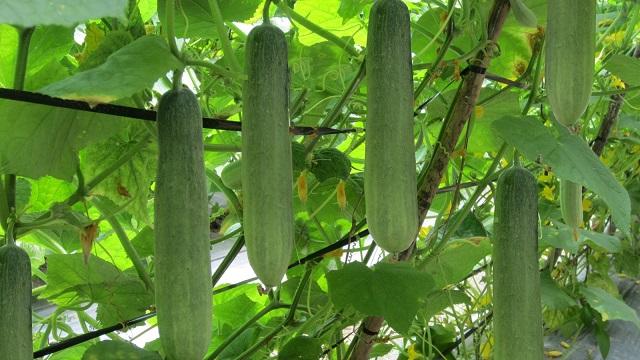 Vườn Mặt Trời - Địa chỉ cung cấp hạt giống uy tín