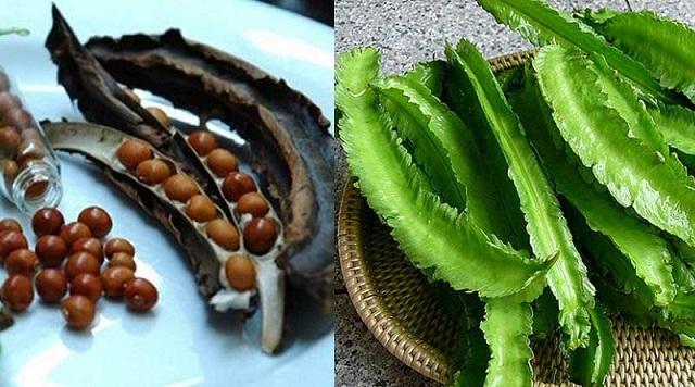 Báo giá hạt giống đậu rồng