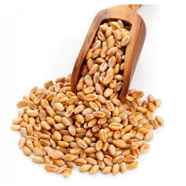 Báo giá hạt giống lúa mì