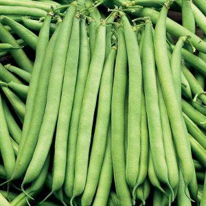 hạt giống đậu cove