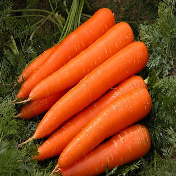 giống cà rốt