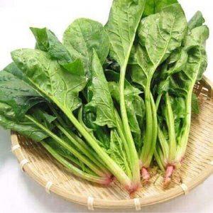 hạt giống rau cải bó xôi